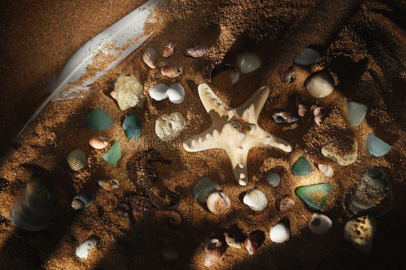 w plaży morza zdjęcia royalty free