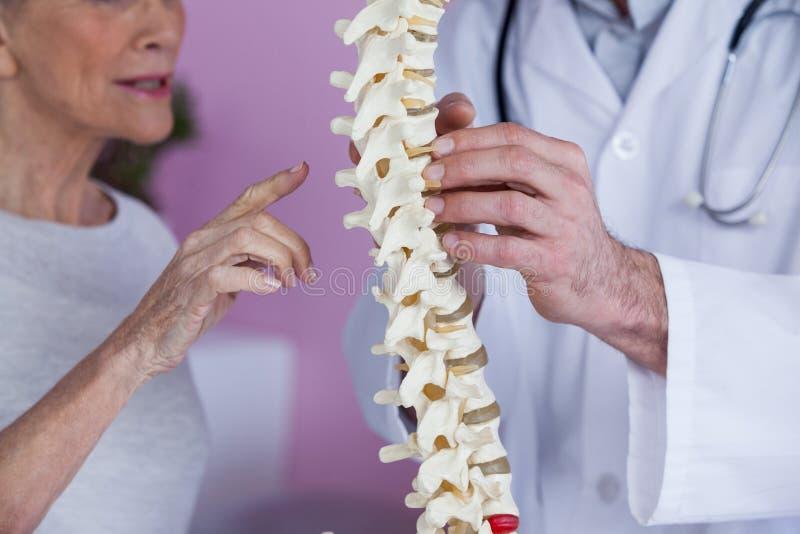W połowie sekcja wyjaśnia kręgosłupa modela pacjent physiotherapist obraz royalty free