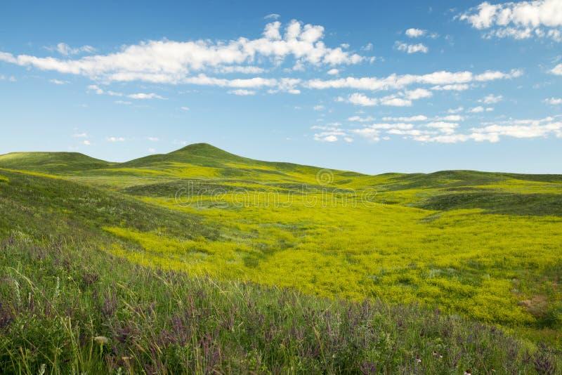 W Południowym Dakota czarny Wzgórza obrazy royalty free