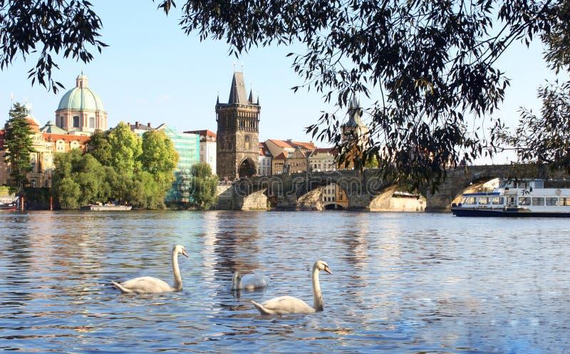 W Praga Charles most zdjęcie royalty free