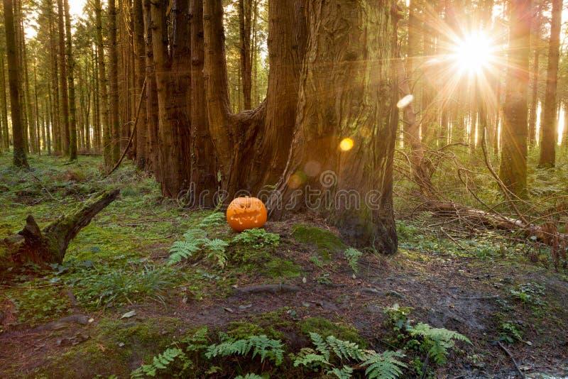 W sosnowym lesie halloweenowa Bania zdjęcia stock