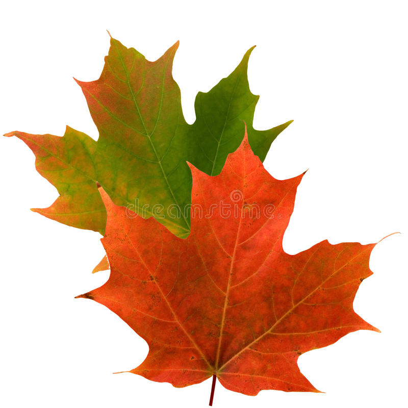 W spadek liścia klonowy kolor zdjęcia stock