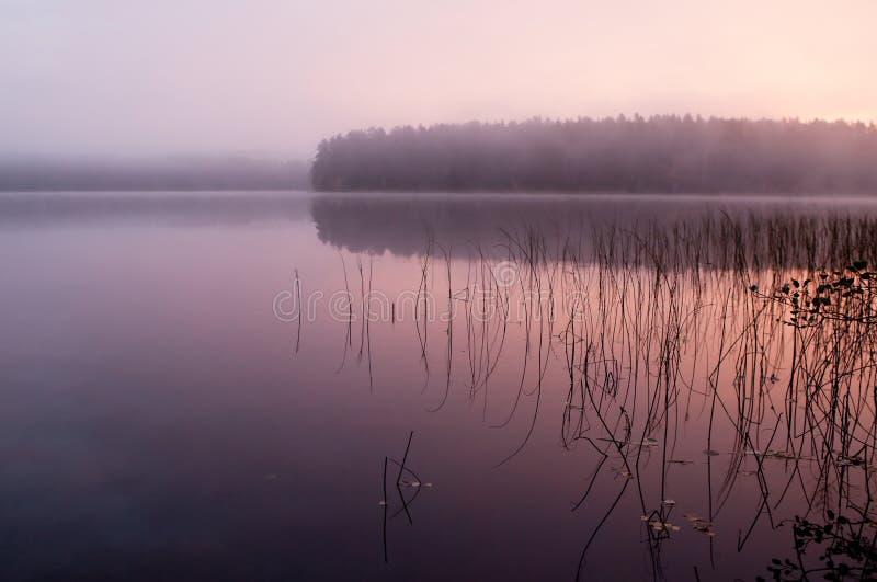 W spokojnym ranek mgłowa drewniana jeziorna jesień, fotografia stock