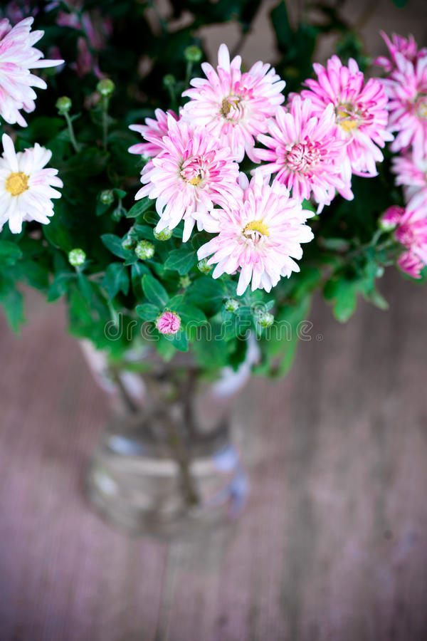 W szklanej wazie różowa chryzantema obrazy stock