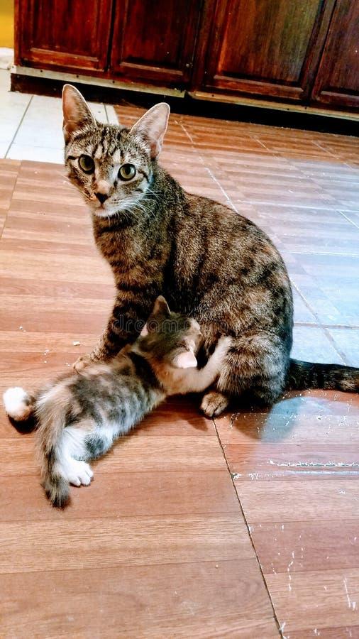 W ten sposób ładny mój kot rodzina obraz stock
