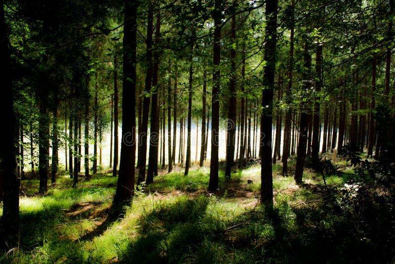 W Tolkiens lesie obraz stock