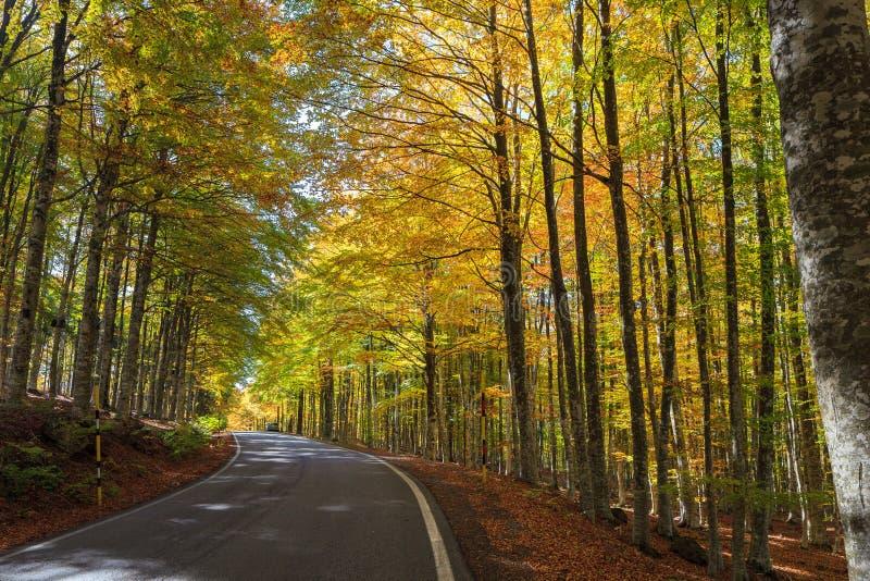W Tuscany kolorowy bukowy las obrazy stock