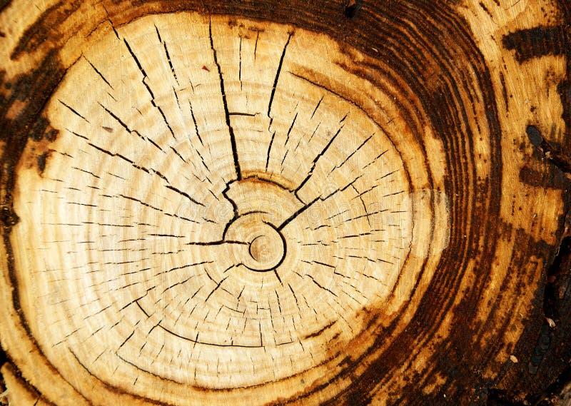 w wieku drzew obraz stock
