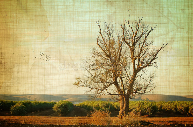 w wieku drzew obrazy stock