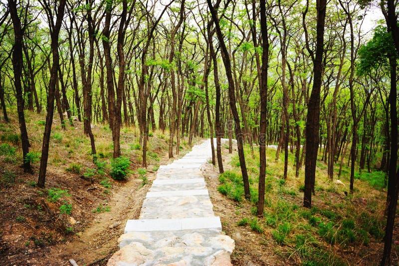 W wiośnie ścieżka w drewnach zdjęcie royalty free