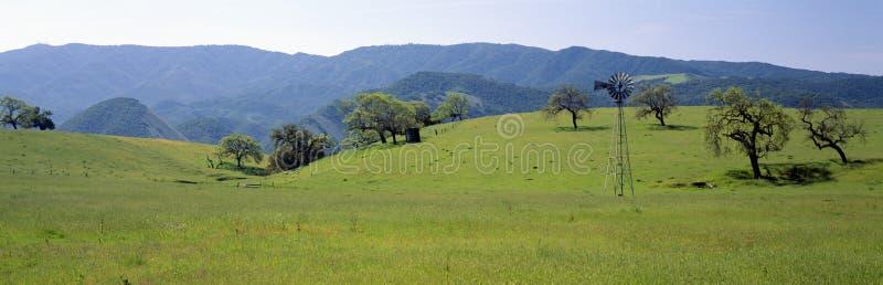 W wiosna wiatraczków i dębu drzewa obrazy royalty free