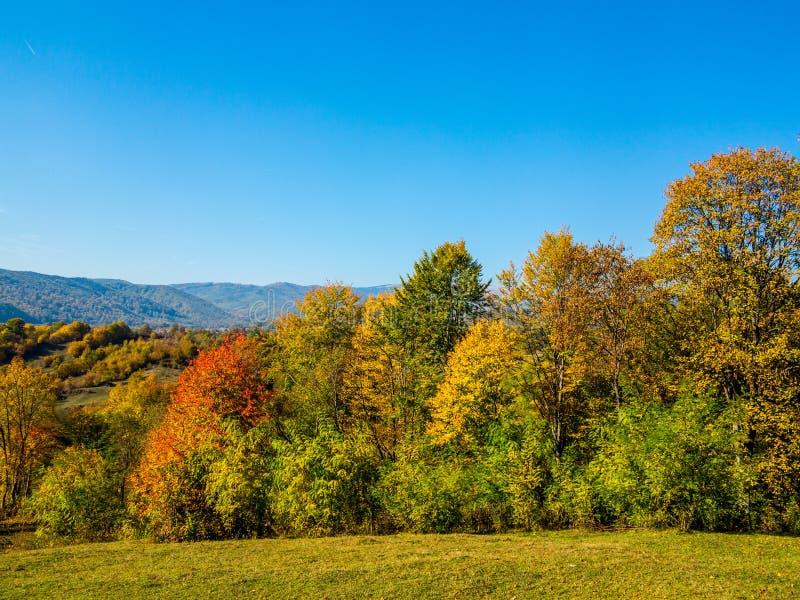W wsi jesień drzewa zdjęcie stock