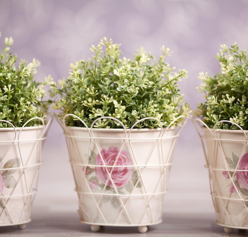 W zdobnych flowerpots trzy rośliny obrazy stock