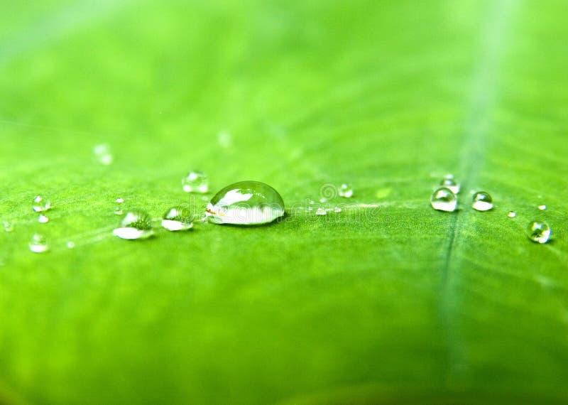 W zielonym liść wodne krople zdjęcia stock