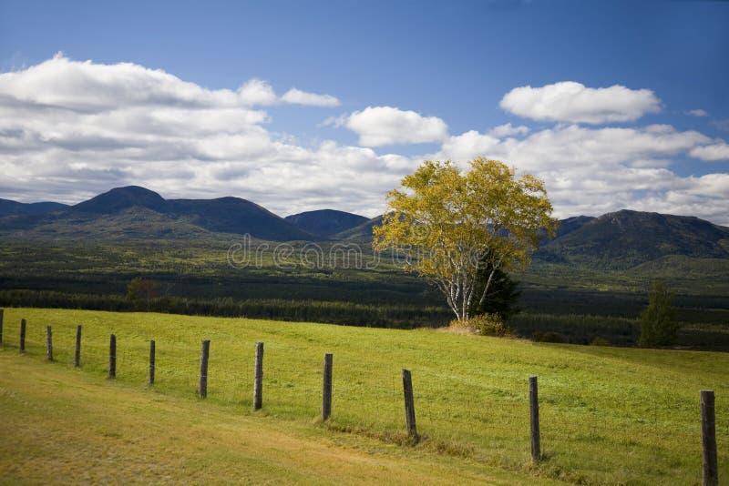 W zielonym polu jeden drzewo obrazy stock
