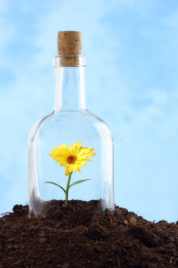 W ziemi mały kwiat fotografia royalty free