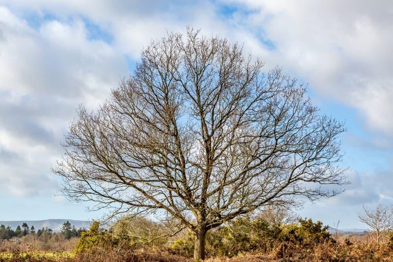W Zima Nagi Drzewo obrazy stock