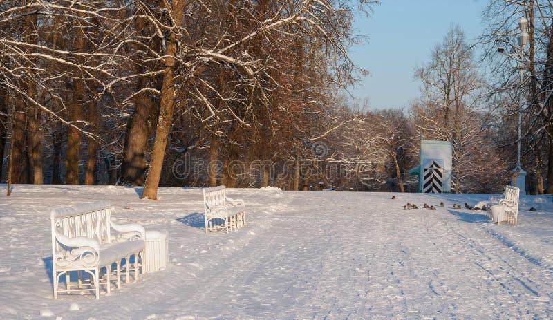 W zima parku zdjęcia royalty free