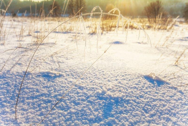 W zima polu zmierzchu światło fotografia royalty free