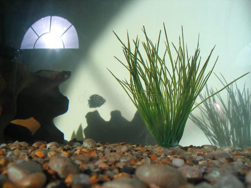 Waar alle Vissen zijn gegaan? royalty-vrije stock afbeelding