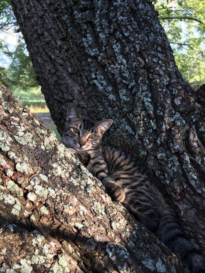 Waar is de kat? Ziet u hem? royalty-vrije stock foto