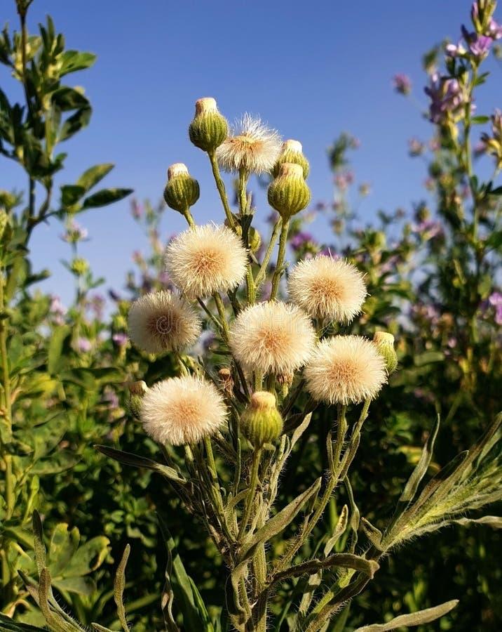 Waar doornen en bloemen royalty-vrije stock fotografie