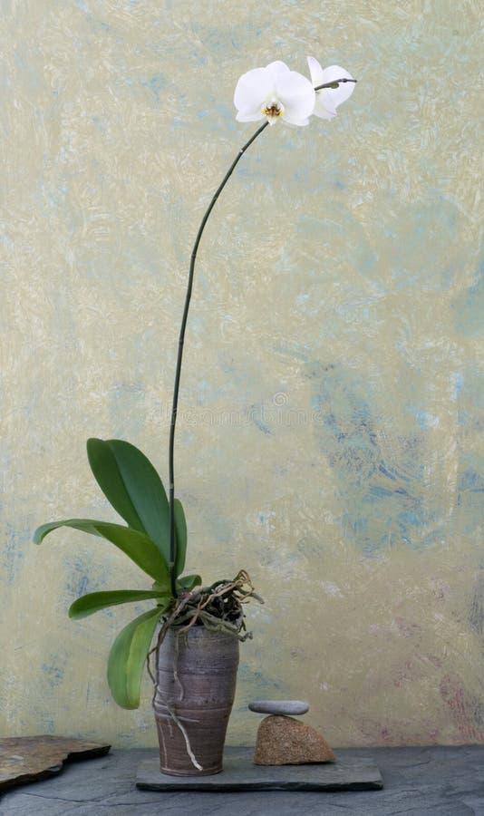 Wabi Sabi Orchid stock photos