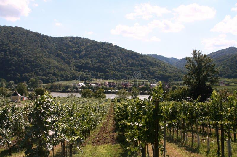 Wachau Dolinni winnicy przegapiają Danube zdjęcie stock