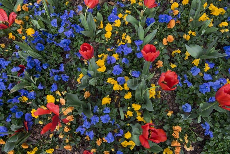 Wachen Sie auf und riechen Sie die Tulpen! lizenzfreies stockfoto