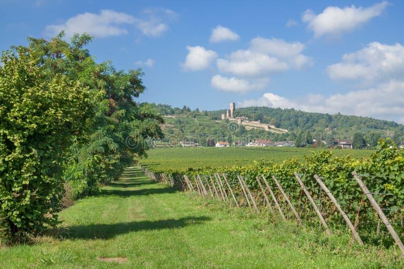 Wachenheim, itinéraire allemand de vin, Allemagne photos libres de droits