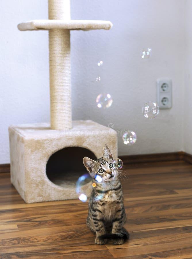 Waching såpbubblor för kattunge royaltyfria bilder