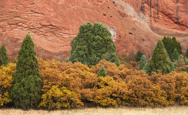 Wacholderbüsche und gelbe Büsche mit rotem Felsen lizenzfreies stockfoto
