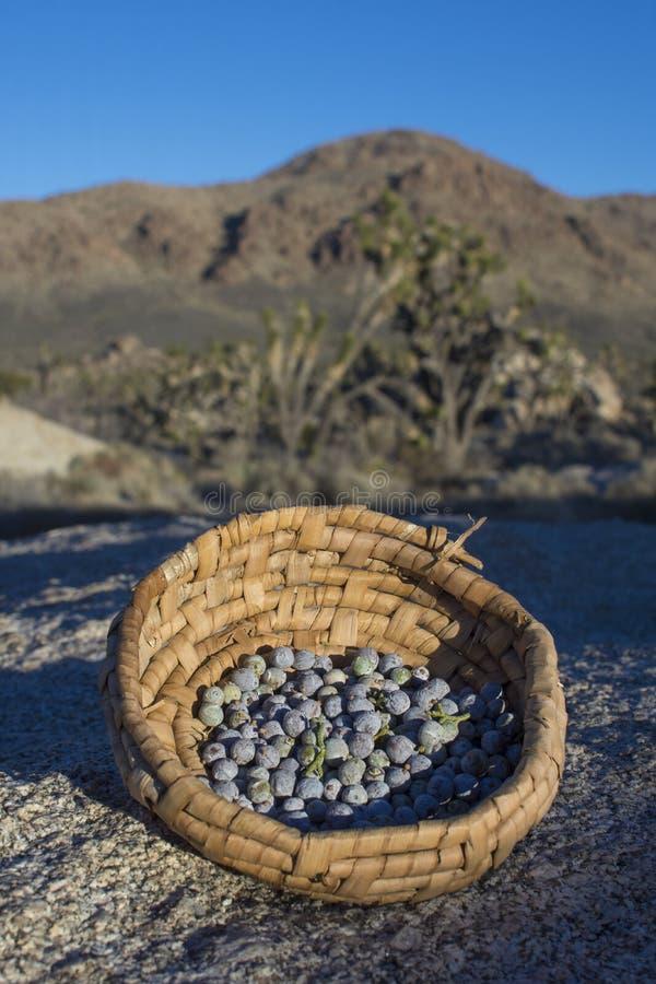 Wacholderbeeren gesammelt im Korb in der Wüste stockfoto