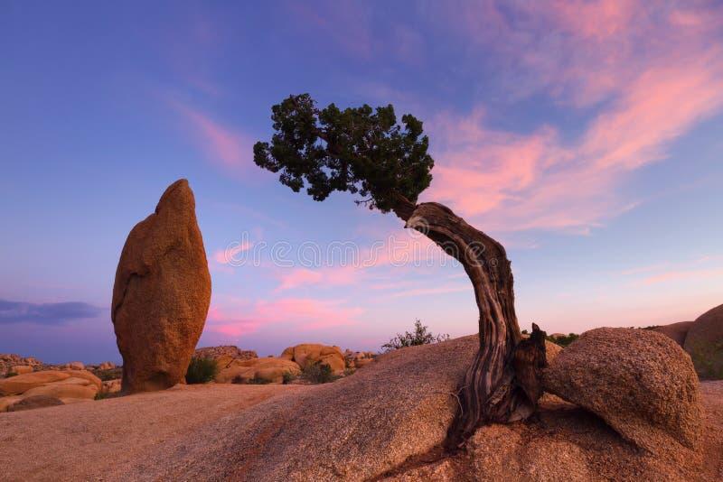 Wacholderbusch-Baum und Balancen-Felsen stockbilder