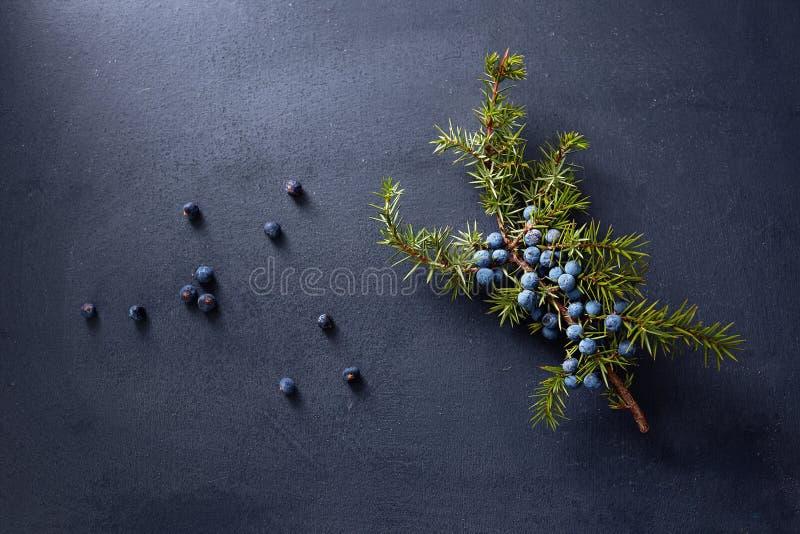 Wacholderbuschniederlassung mit Beeren stockfoto