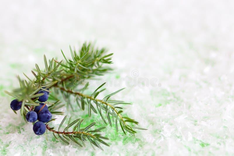 Wacholderbuschniederlassung mit Beeren auf einem grünen Hintergrund mit künstlichem Schnee stockfotografie