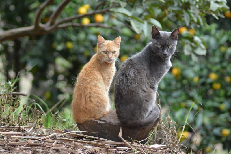 Wachsame Katzen lizenzfreies stockbild