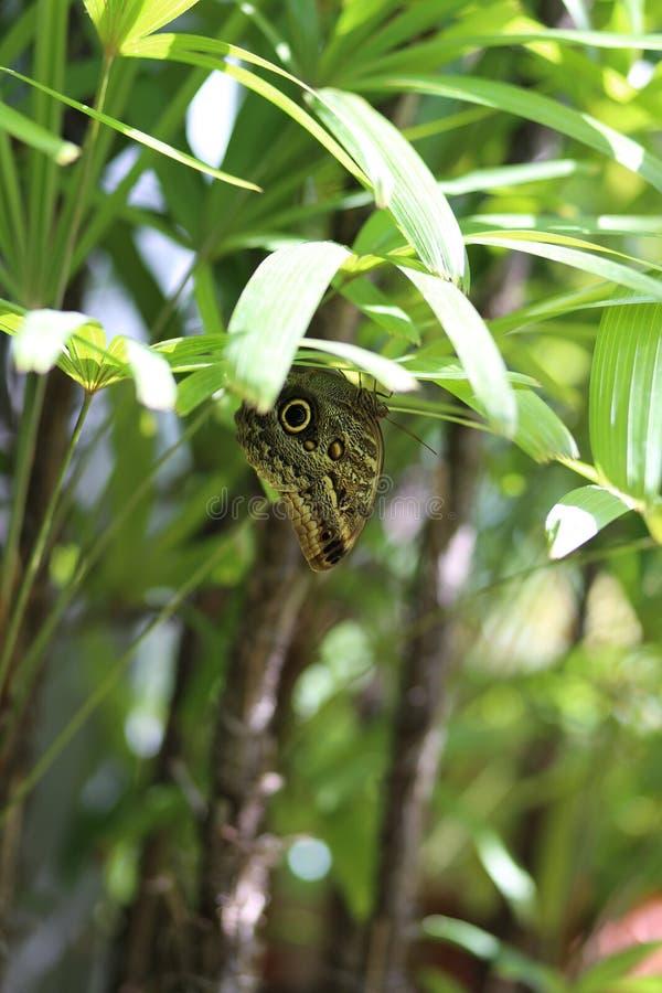 Wachsames Auge des Schmetterlinges stockfotos