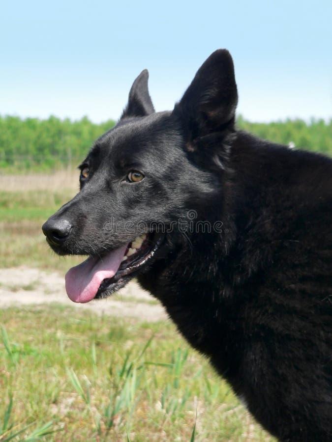 Wachsamkeit eines Hundes lizenzfreies stockbild