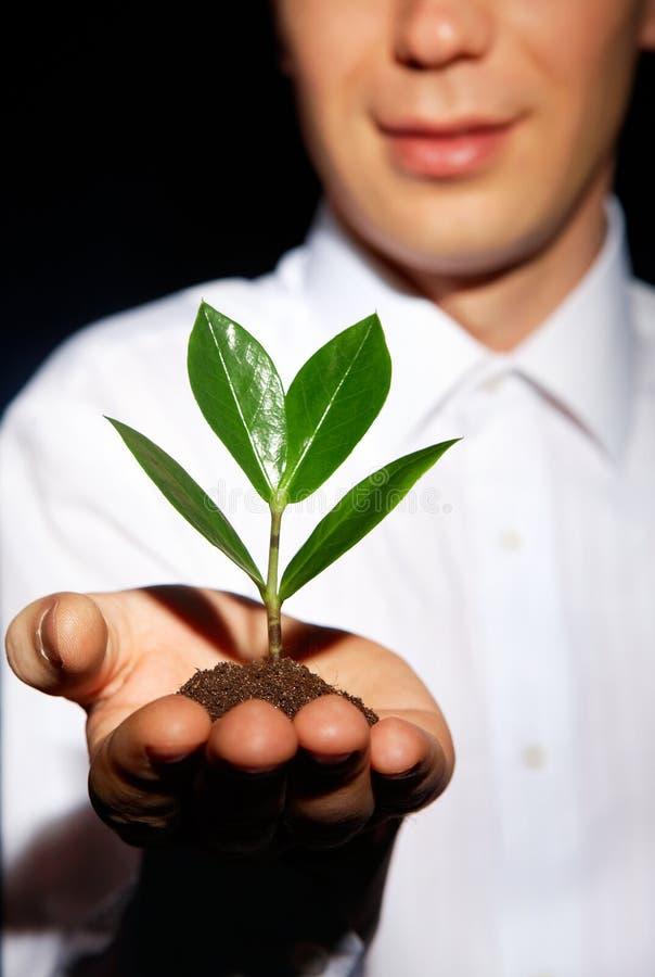 Wachsen Sie einen Baum stockfotos
