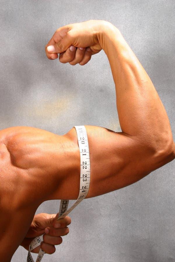 Wachsen Sie Ihren Muskel stockfoto