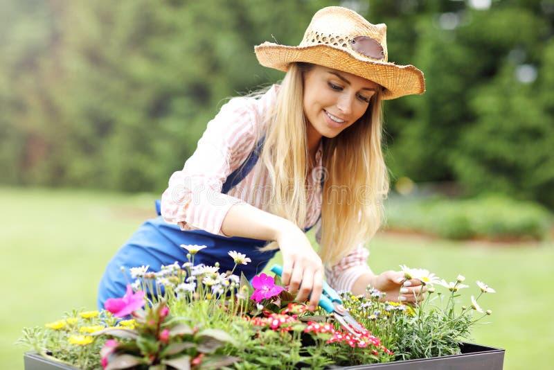 Wachsende Blumen der Frau draußen im Sommer stockfotografie