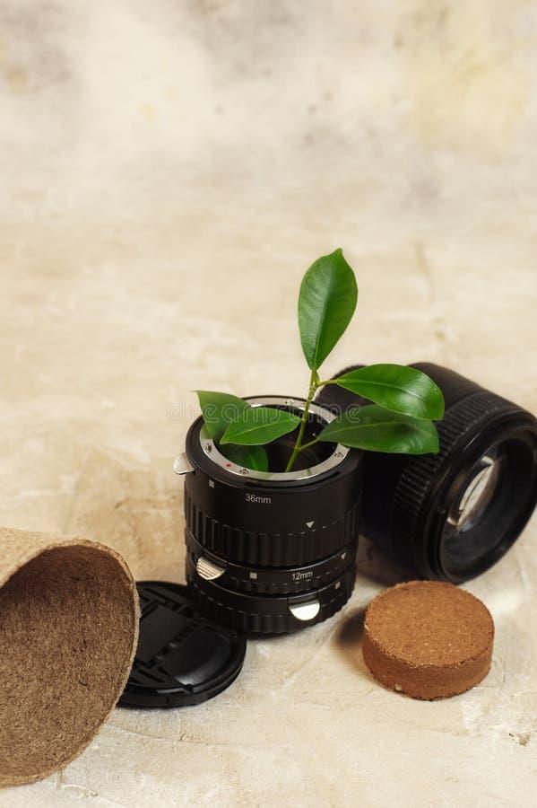 Wachsende Grünpflanzen in benutztem altem der FotoKameraobjektiv und Wiederverwendung bereiten eco Konzept auf lizenzfreie stockfotos