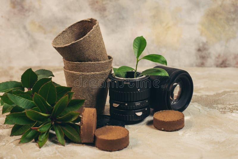 Wachsende Grünpflanzen in benutztem altem der FotoKameraobjektiv und Wiederverwendung bereiten eco Konzept auf stockfotografie