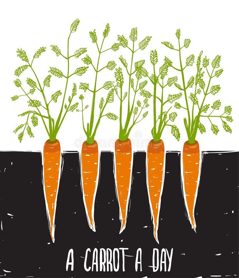 Wachsende Karotten-kratzige Zeichnung und Beschriftung lizenzfreie abbildung
