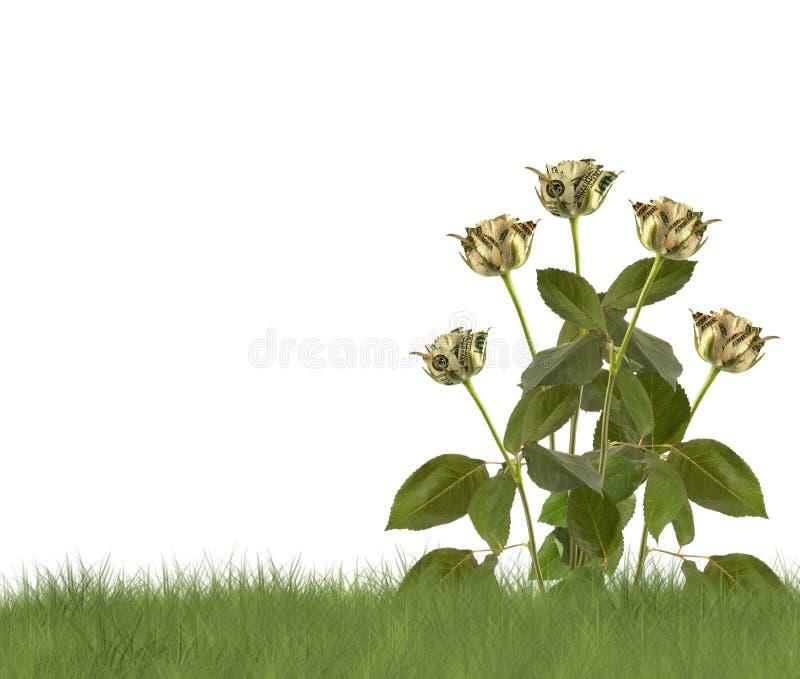 Wachsende Rosen auf dem weißen Hintergrund lizenzfreies stockfoto