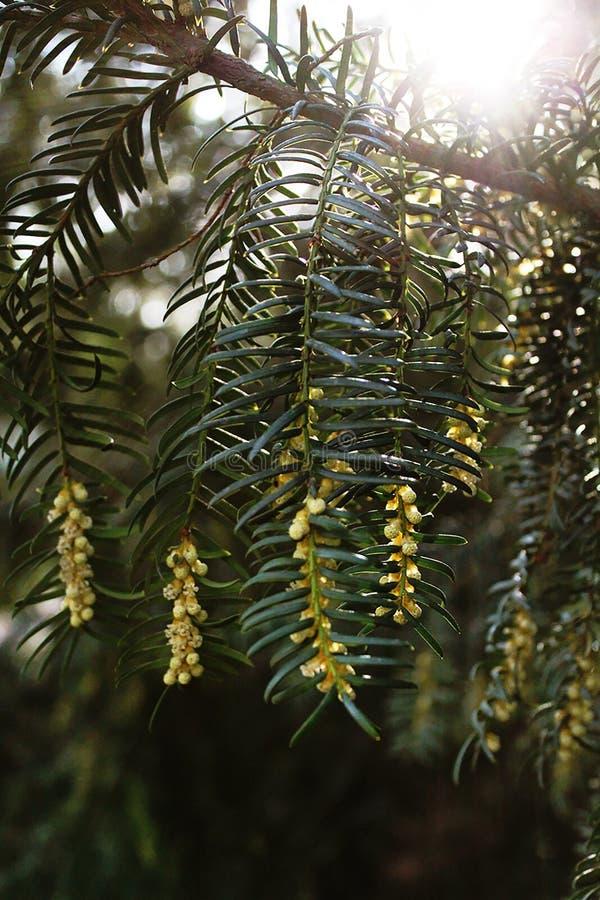 Wachsender grüner Baum stockbilder