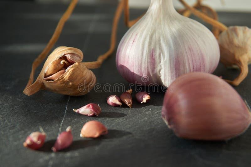 Wachsender Knoblauch von den Nelken oder von den Bulbils stockfotografie