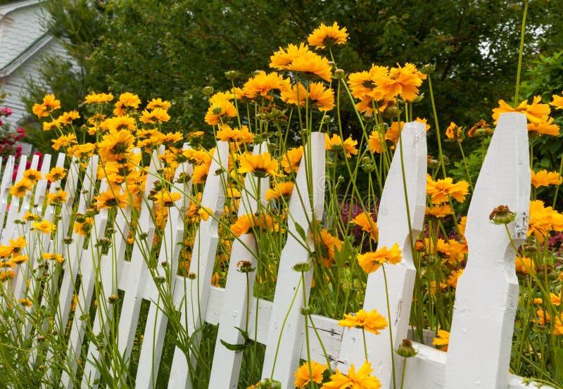 Wachsender weißer Pfostenübermäßigzaun der wilden Blumen stockfoto