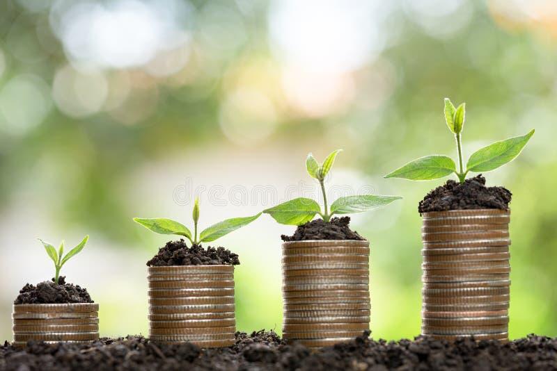 Wachsendes Konzept des Geldes, Baum, der auf Stapel des Münzengeldes wächst stockbilder